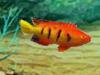 Tesori subacquei