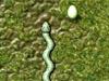 Snake's Adventure