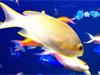 Dicas escondidas - criatura aquática