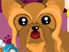 犬のブリーダー コンテスト