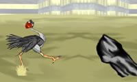 Een struisvogel Cool met 3