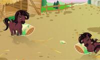 Asisten peternakan kuda