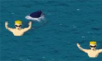 Haaien Vs zwemmers