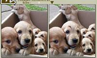 Gimme 5 honden